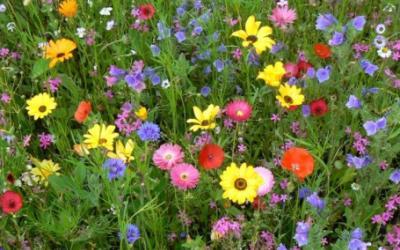 Bijenplanten voor een bloemrijke tuin