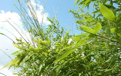 Goede klanten ontvangen 10% korting op alle bamboeproducten