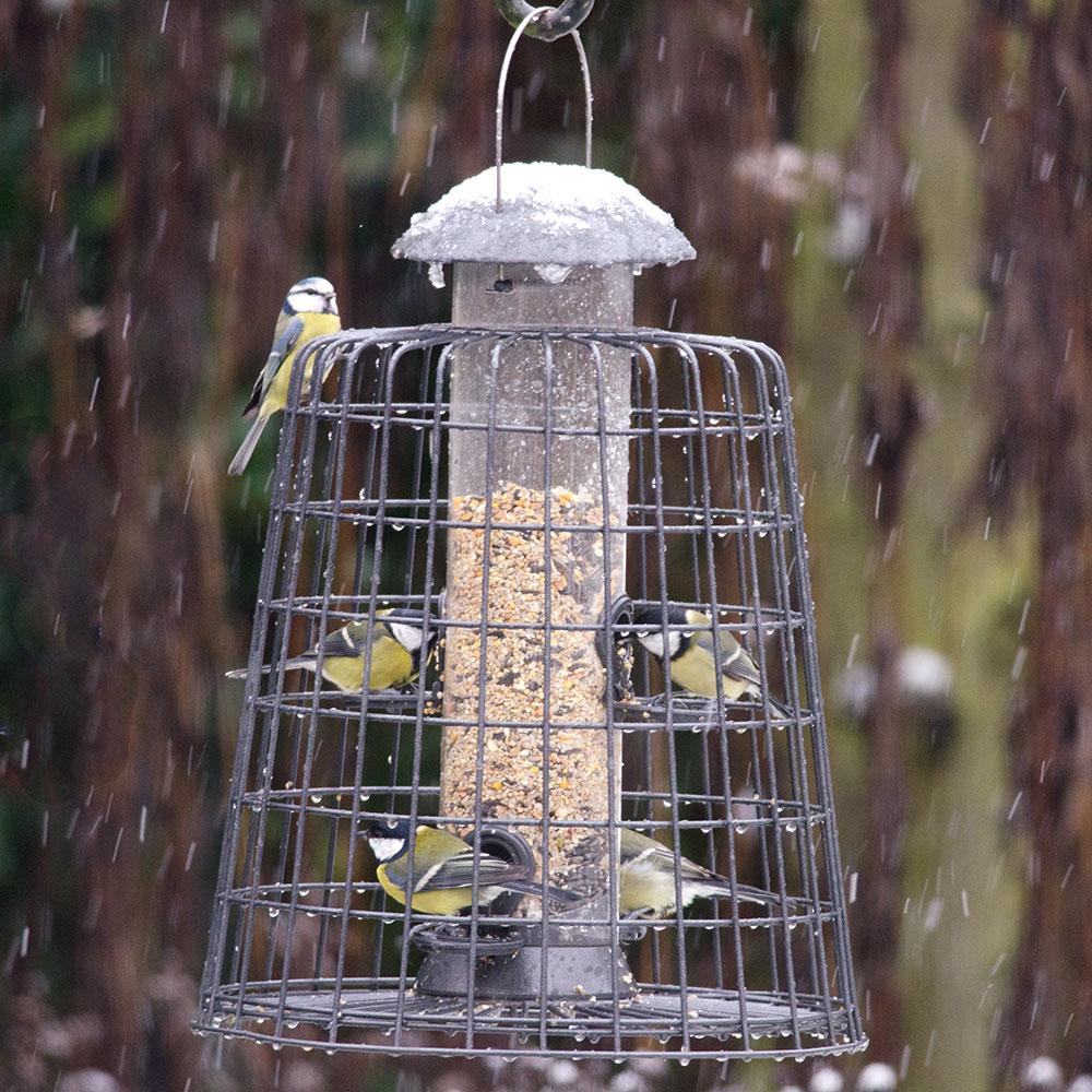 Goede klanten ontvangen 15% korting op vogelvoer en voedersystemen.