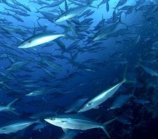 25 - De vis wordt duur betaald
