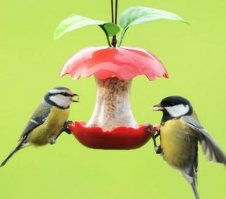 Help vogels de winter door! Of juist niet?